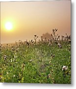 Morning Dew On Spiders Cobweb Metal Print