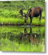 Morning Isolation Metal Print