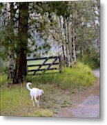 Morning Walk1 Metal Print