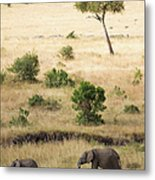 Mother And Baby Elephant In Savanna Metal Print