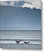 Mother And Calf Whale Tails Megaptera Metal Print