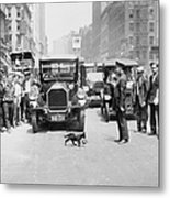 Mother Cat Blackie Halts Traffic As She Metal Print