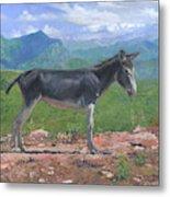 Mountain Donkey  Metal Print