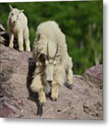 Mountain Goats- Nanny And Kid Metal Print