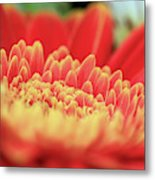 Mum Flower Metal Print