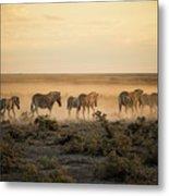 Namibia, Etosha National Park, Herd Metal Print