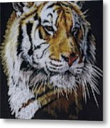 Nanook the Tiger Metal Print