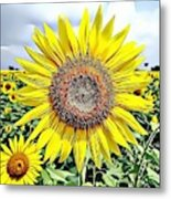 Naturalness And Flowers 51 Metal Print