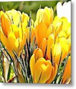 Naturalness And Flowers 56 Metal Print