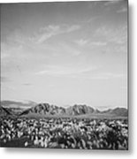 Near Death Valley National Monument Metal Print