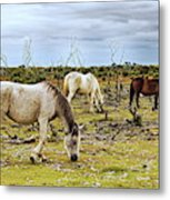 New Forest Ponies On The Heath Metal Print