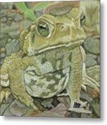 Noble Toad Metal Print
