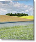 Oilseed Flax, Wiltshire U.k Metal Print