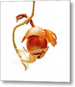 Onion On A White Background Metal Print