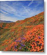 Oodles Of Poppies Fill The Walker Canyon Of Lake Elsinore, Calif Metal Print