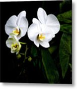 Orchids And Leaves Metal Print