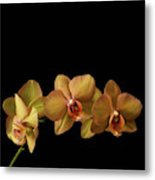 Orchids On Black Metal Print