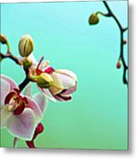 Orchids Out For A Breath Of Fresh Air Metal Print