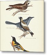Order Passeriformes Metal Print