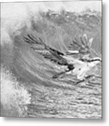 Osprey The Catch Bw Metal Print