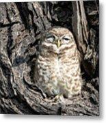 Owl In A Tree Metal Print