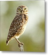 Owl On Blurred Background Metal Print