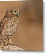 Owl Vs Bee Metal Print