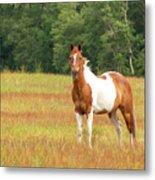 Paint Horse In Meadow Metal Print