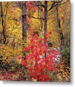 Painted Forest Metal Print