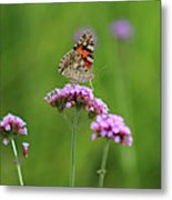 Painted Lady Butterfly Beauty Metal Print