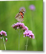 Painted Lady Butterfly In Green Field Metal Print