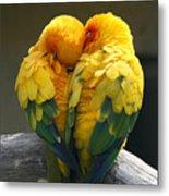 Pair Lovebirds Metal Print