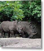 Pair Of Rhinos Standing In The Shade Of Trees Metal Print