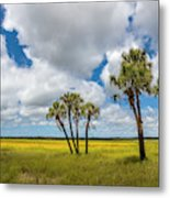 Palm Trees In The Field Of Coreopsis Metal Print