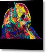 Panda Little Bear Australia Animal Color Designed Metal Print