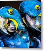 Pastel Painting Of A Blue Parrots On A Metal Print