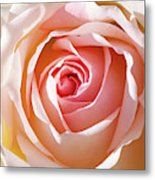 Soft As A Rose Metal Print