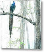 Peacock In Winter Mist Metal Print