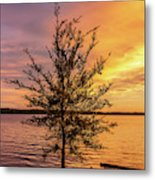 Percy Priest Lake Sunset Young Tree Metal Print