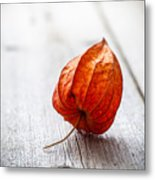 Physalis Alkekengi On Wood Metal Print