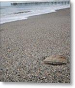 Pier Seashell Metal Print