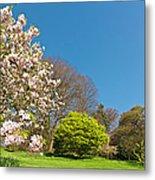 Pink Blossom Blooming Lush Green Spring Metal Print