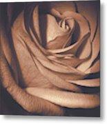 Pink Rose Petals 0219 Metal Print