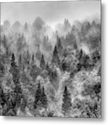 Pinsapos Into The Woods. Bw. Foggy Sunrise Metal Print