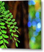 Plants, Trees And Flowers Metal Print