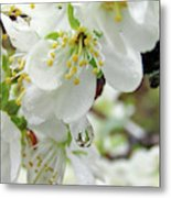 Plum Blossoms 2 Metal Print