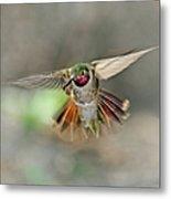 Poetry In Motion - Hummingbird Hovering Metal Print