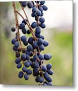 Pokeberries Metal Print