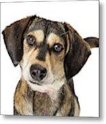 Portrait Cute Medium Size Crossbreed Dog Metal Print