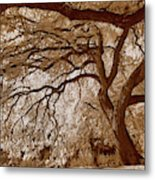 Portrait Of A Tree In Infrared Metal Print